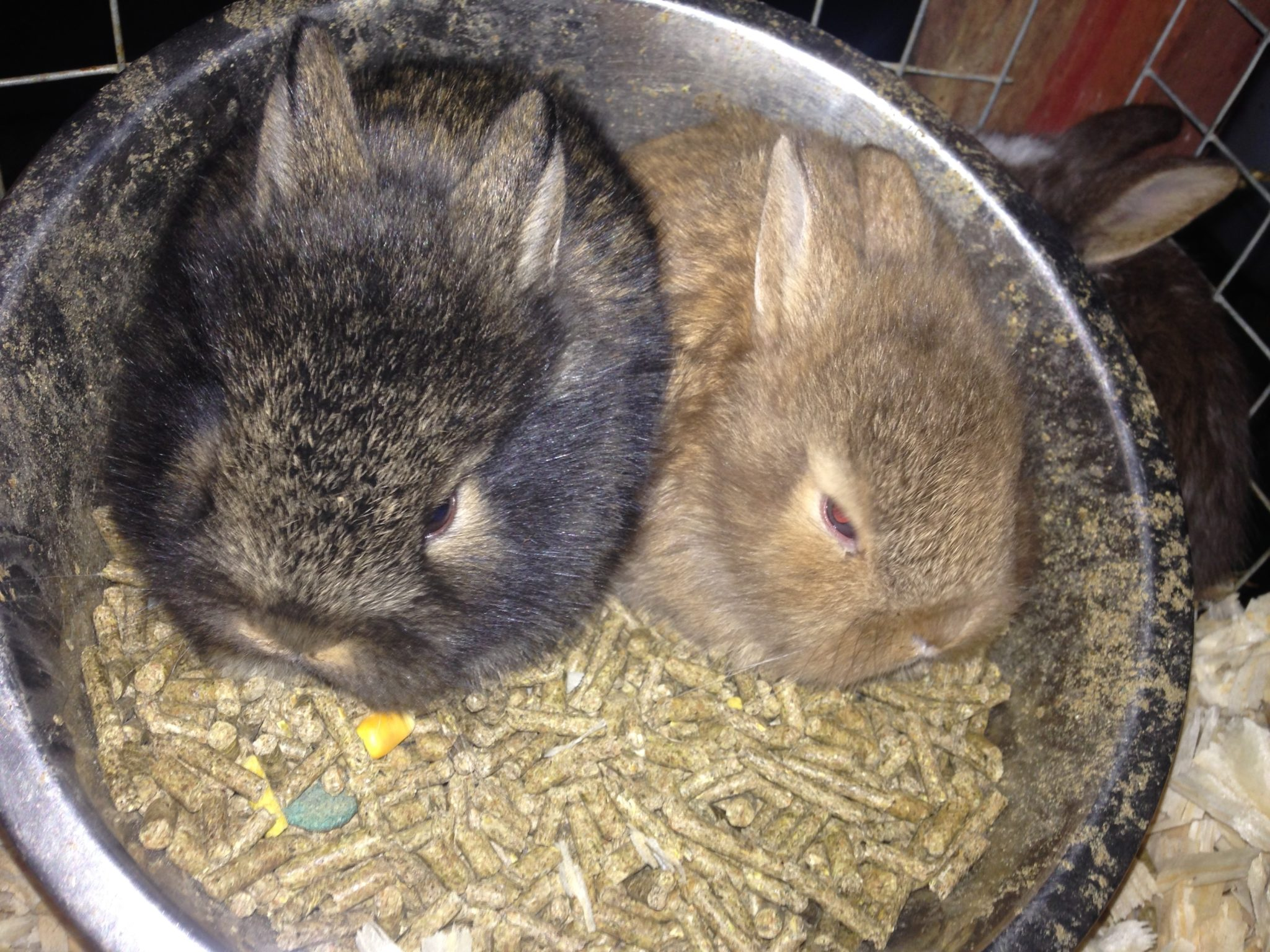 My Rabbits and Bunnies